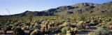 Coyote Canyon, Anza Borrego Desert State Park, California, USA Photographic Print by  Panoramic Images