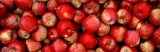 Close-up of Red Apples Fotografisk tryk af Panoramic Images,