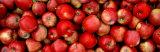 Close-up of Red Apples Reprodukcja zdjęcia autor Panoramic Images