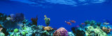 Underwater, Caribbean Sea Photographic Print by  Panoramic Images