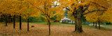 Autumn, Muskoka, Canada Photographic Print by  Panoramic Images