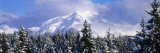 Forest, Chugach Mountains, Alaska, USA Photographic Print by  Panoramic Images