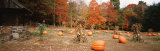 Pumpkins on a Field, Connecticut, USA Photographic Print by  Panoramic Images