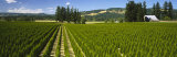 Crops in a Field, Yamhill County, Oregon, USA Photographic Print by  Panoramic Images