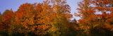 Fall Trees, Vermont, USA Photographic Print by  Panoramic Images
