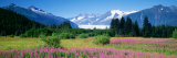 Fireweed, Mendenhall Glacier, Juneau, Alaska, USA Photographic Print by Panoramic Images 