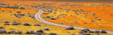 Road Through Poppy Blossoms, Goldfields, Antelope Valley, California, USA Photographic Print by  Panoramic Images