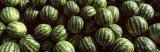 Close-up of Watermelons, Eger, Eastern Hungary Stampa fotografica di Panoramic Images,