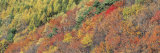 Fall Trees, Tateshina, Chino, Nagano, Japan Photographic Print by  Panoramic Images