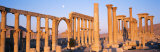 Ruins, Palmyra, Syria Photographic Print by Panoramic Images