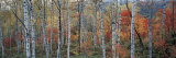 Fall Trees, Shinhodaka, Gifu, Japan Fotodruck von  Panoramic Images