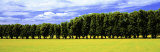 Row of Trees, Uppland, Sweden Photographic Print by Panoramic Images 
