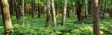 Trees, Forest Floor Photographic Print by Panoramic Images