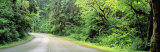 Road, Rockport State Park, Washington State, USA Photographic Print by  Panoramic Images