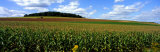 Field of Corn with Tractor in Distance, Carroll County, Maryland, USA Photographic Print by  Panoramic Images