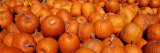Close-up of Pumpkins Fotografiskt tryck av Panoramic Images,