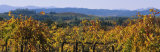 High Angle View of a Field, Alexander Valley, Napa, California, USA Photographic Print by  Panoramic Images