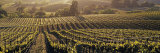 Aerial View of Rows Crop in a Vineyard, Careros Valley, California, USA Lámina fotográfica por Panoramic Images,