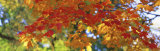 Fall Foliage, Guilford, Baltimore City, Maryland, USA Photographic Print by  Panoramic Images