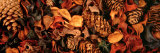 Close-up of Potpourri Photographic Print by Panoramic Images