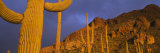 Saguaro Cactus, Tucson, Arizona, USA Photographic Print by  Panoramic Images