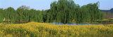 Mustard Plants, Silverado Trail, Napa County, California, USA Photographic Print by  Panoramic Images