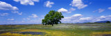 Single Tree in Field of Wildflowers, Table Mountain, Oroville, California, USA Photographic Print by  Panoramic Images