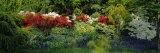 High Angle View of Flowers in a Garden, Baltimore, Maryland, USA Photographic Print by  Panoramic Images