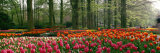 Keukenhof Garden, Lisse, the Netherlands Fotoprint van Panoramic Images,