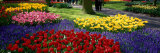 Keukenhof Garden, Lisse, the Netherlands Photographic Print by  Panoramic Images