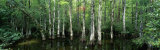 Big Cypress Nature Preserve, Florida, USA Photographic Print by  Panoramic Images