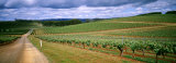 Vineyard, Tasmania, Australia Photographic Print by  Panoramic Images