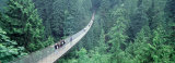 Capilano Bridge, Suspended Walk, Vancouver, British Columbia, Canada Photographic Print by Panoramic Images