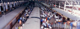 Victoria Station, Mumbai Bombay, India Photographic Print by Panoramic Images