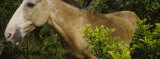 Close-up of a Horse in a Forest, Costa Rica Photographic Print by  Panoramic Images