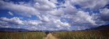 Country Road, Oaxaca, Mexico Photographic Print by  Panoramic Images