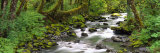 Olympic National Park, Washington State, USA Stampa fotografica di Panoramic Images,