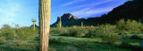 Saguaro Cactus in a State Park, Picacho Peak State Park, Arizona, USA Photographic Print by  Panoramic Images