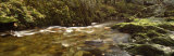 Stream Flowing Through a Forest, River Doe Lea, Baxenghyll Gorge, North Yorkshire, England, UK Photographic Print by  Panoramic Images