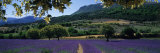 Mountain Behind a Lavender Field, Provence, France Photographic Print by  Panoramic Images