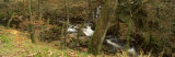 A River Flowing Through a Forest, River Doe Lea, River Rother, South Yorkshire, England, UK Photographic Print by  Panoramic Images