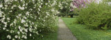 Path in a Park, Richmond, Virginia, USA Photographic Print by  Panoramic Images