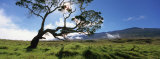 Koa Tree on a Landscape, Mauna Kea, Big Island, Hawaii, USA Photographic Print by Panoramic Images