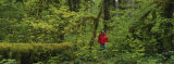 Man Walking in a Rainforest, Olympic National Park, Washington State, USA Photographic Print by  Panoramic Images