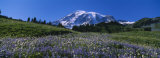 Wildflowers on a Landscape, Mt. Rainier National Park, Washington State, USA Photographic Print by  Panoramic Images