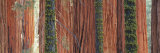 Giant Sequoia Trees in a Forest, Sequoia National Park, California, USA Photographic Print by  Panoramic Images