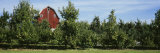 Red Barn Behind Apple Trees, Grand Rapids, Michigan, USA Photographie par Panoramic Images
