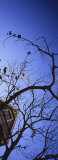 Low Angle View of a House and a Bare Tree, San Francisco, California, USA Photographic Print by  Panoramic Images