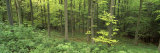 High Angle View of Trees in a Forest, Scarborough, England, United Kingdom Photographic Print by  Panoramic Images