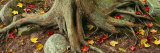 Close-up of Tree Roots, Sleeping Bear Dunes National Lakeshore, Michigan, USA Photographic Print by  Panoramic Images